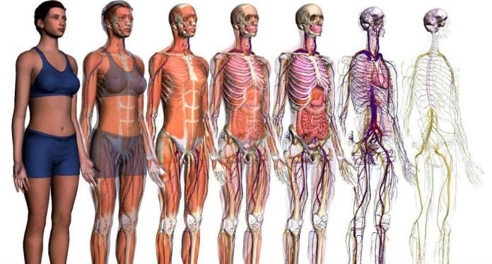 36 curiosidades que você não sabia sobre o corpo humano