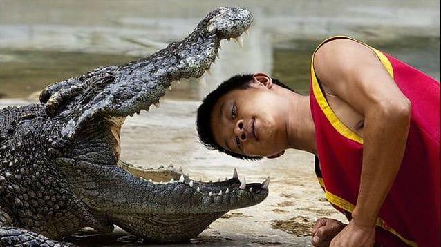 Luta com crocodilo