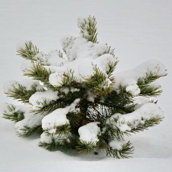 Графика зимнего сада (фото)
