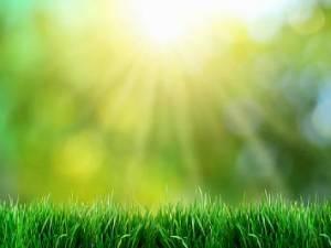 Солнечное место