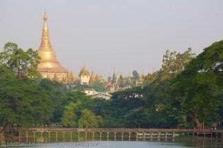 the-prodigal-dog_shwedagon_pagoda2