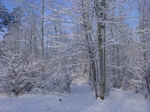 SHABBAT SNOW 10