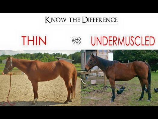 Thin versus undermuscled.