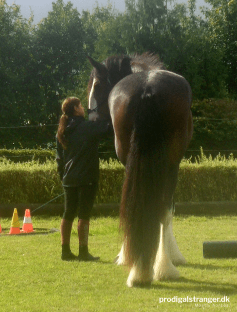 Gotta hand it to the Shires, they're TALL. Of course, this guy is current the tallest Shire in Denmark.