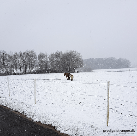 The only two horses new enough to large pasture to bother going out into the white, cold nothing. Everyone else was smart enough to stay inside.