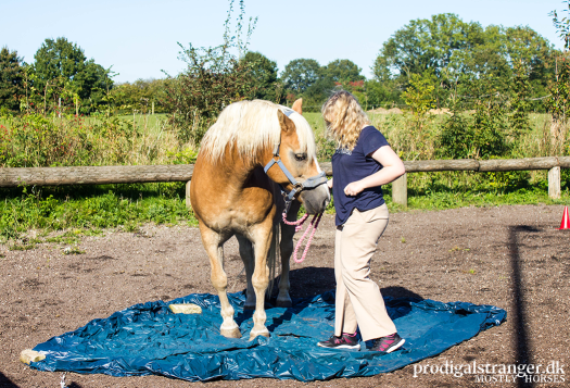 A horse depends on his legs for survival. Horses are picky about what they'll step on, and big, noisy tarps are often a flat no. Nando required his human to show him but then it was fine. Mutual trust gets you everywhere.