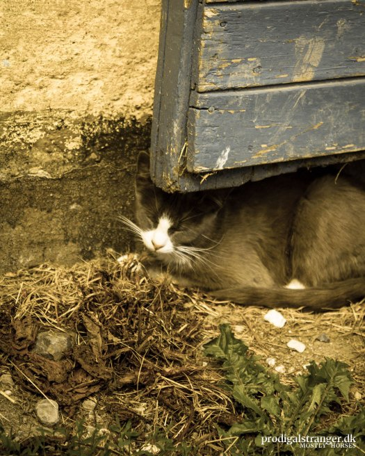 Barn cat is camouflaged.