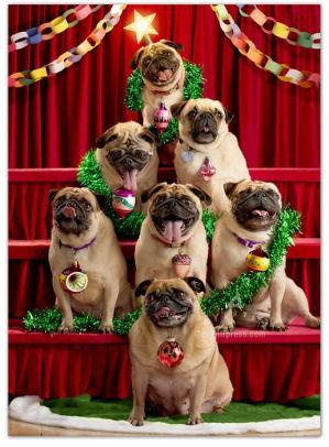 Avanti Boxed Cards Pug Christmas Tre 12615748901 Item