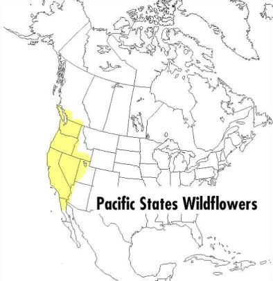 A Field Guide to Pacific States Wildflowers: Washington