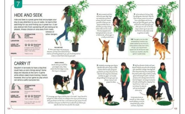 Brain Games For Dogs Fun Ways To Build A Strong Bond With