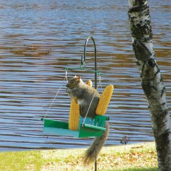 Squirrel Feeder Chair Allsteel Acuity Review Hiatt Manufacturing Porch Swing