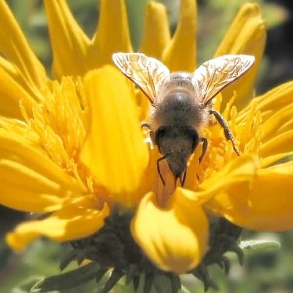 7 Great Life Lessons that Honeybees Teach Us   ProductiveMuslim