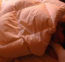 Are Your Sleep Habits Hurting Your Writing Career?