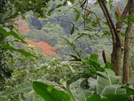 Jungle above Puerto Viejo, Costa Rica
