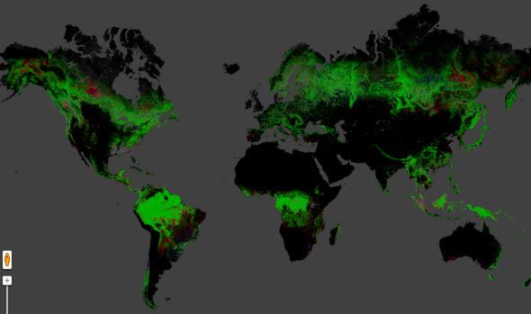Mapa interactivo: Cambio forestal global