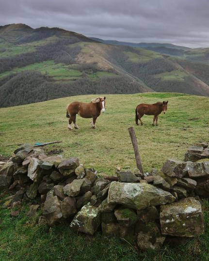 caballos en cantabria