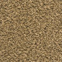 Top 28+ - Empire Flooring And Carpet - shaw carpet sles ...