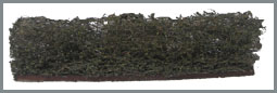 "Hedge 25mm 1"" high"