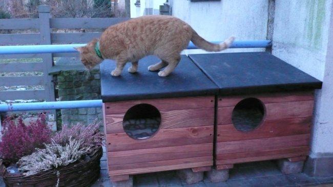 Польские власти согрели и накормили бездомных кошек