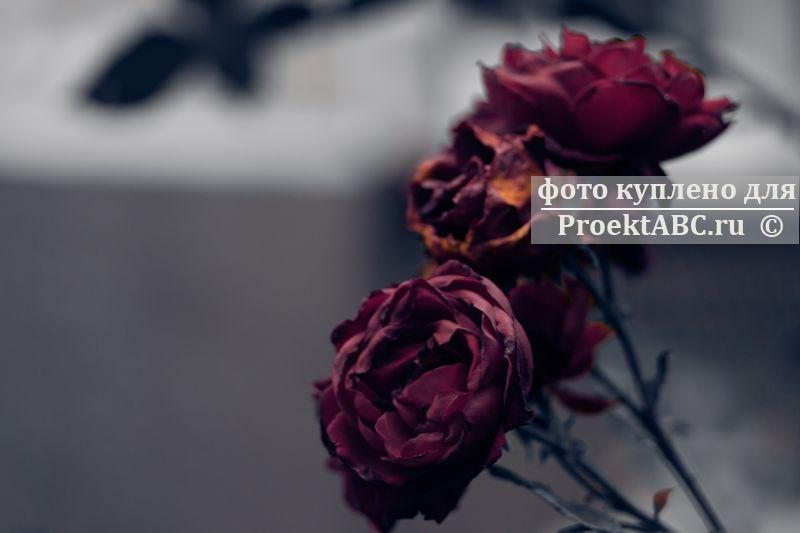 photo673671.jpg