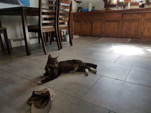 Léon dans la cuisine, comment danser seul en évitant des obstacles vivants!