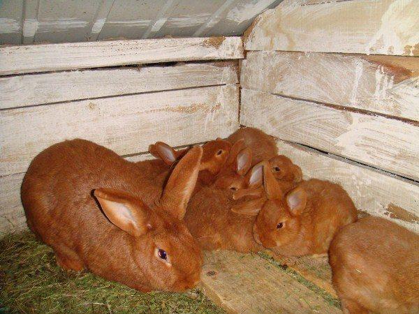 Клетки мини ферма для кроликов чертежи Михайлова