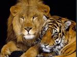 Tema 12: Els animals Vertrebats