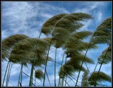 Apa yang Menyebabkan Angin Bisa Bertiup