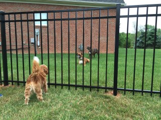 Canine Standoff at The Ornamental Fence