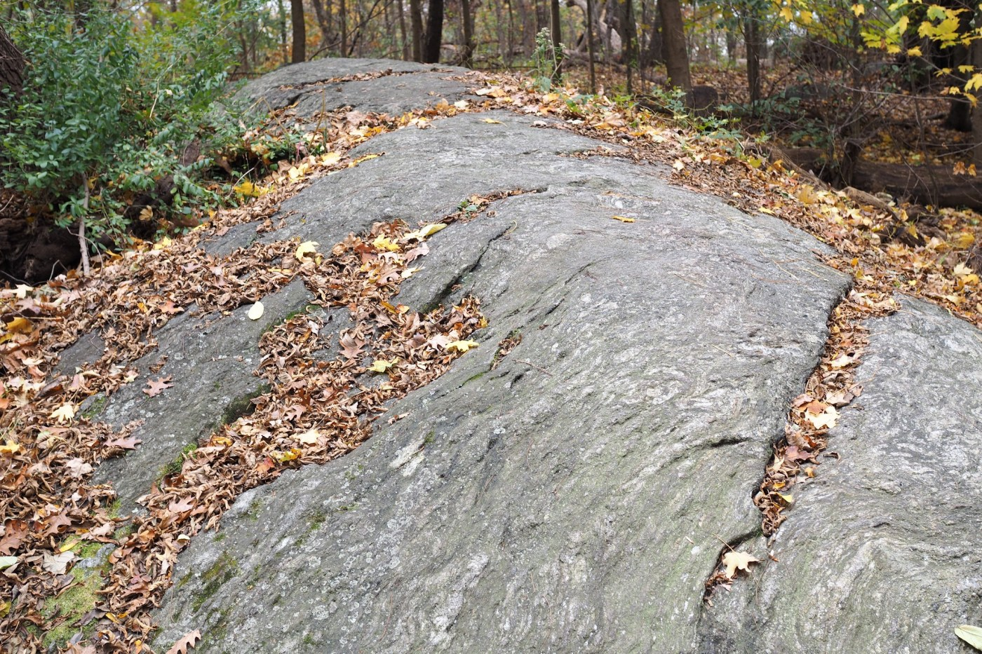 Whale Back Rock at Inwood Hill Park