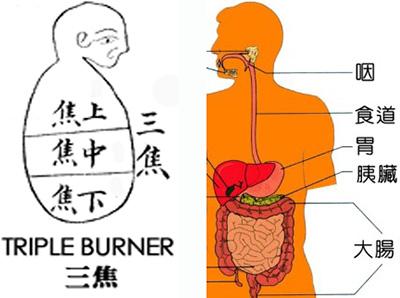 胰臟:中醫千年懸案(1)   科學的養生保健