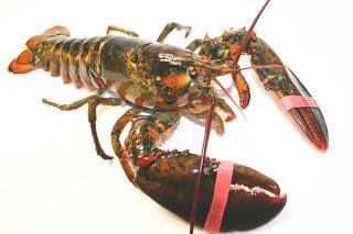 canadian lobster makanan laut frozen