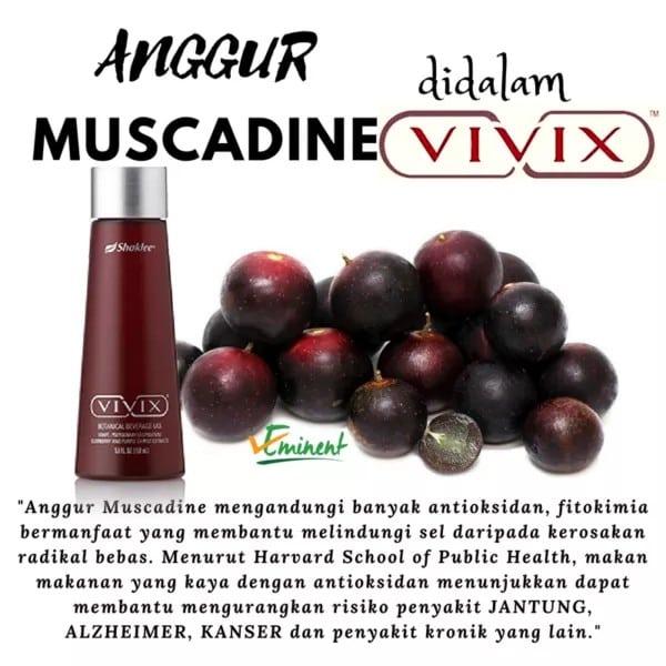 kebaikan anggur muscadine