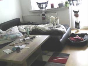 Überwachungskamera filmt Hund