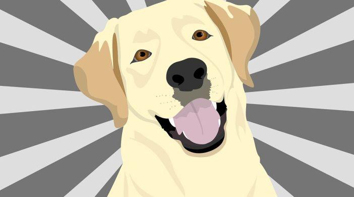 Projekt Superhund: Serie vermittelt falsches Bild von Assistenzhunden
