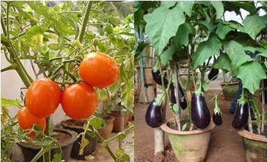 How To Grow Your Very Own Organic Kitchen Garden Sulekha Home Talk