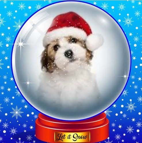 Christmas Snow Globe Profile Frame