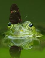 Frog - s