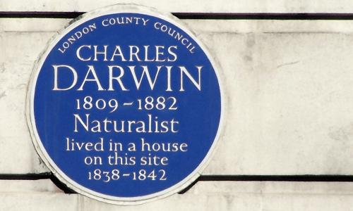 Charles Darwin Blue Plaque on Gower Street London WC1, by Professor Joe Cain