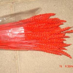 Espigas trigo Vermelho 200gr