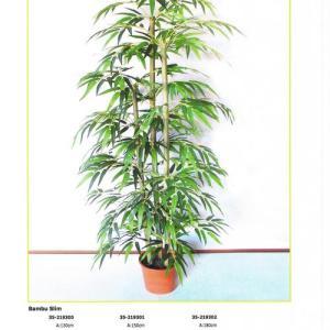Bambu 1,50m 3canas
