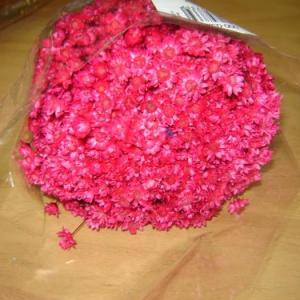 Glixias (flores secas mini) rosa fushia