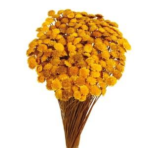 Margaret cor amarelo