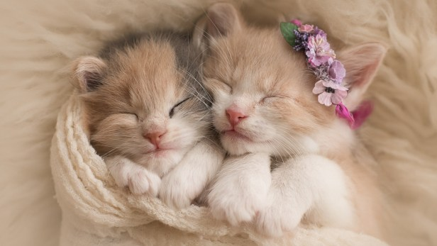 cute-kittens-2560x1440-adorable-hd-5655
