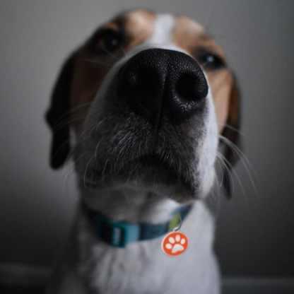 Orange hundetegn med pote