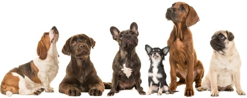 Erkennungsmarken machen es einfacher und schneller, den Besitzer des Hundes zu finden, wenn er verschwunden ist.