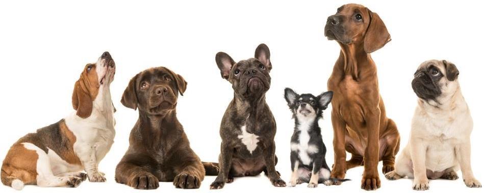 Hundetegn gør det nemmere og hurtigere at finde hundens ejer, hvis den er blevet væk.