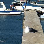 aves_chiclana