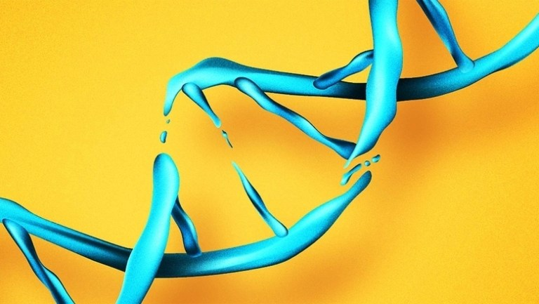 To learn faster, the brain constantly breaks its DNA.