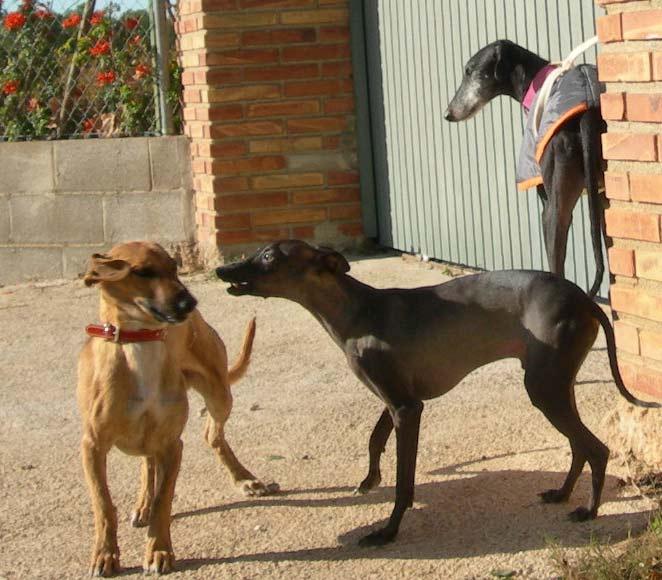 el GALTEK jugando con la manada